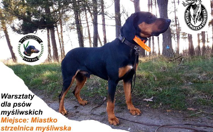 Darmowe warsztaty dla psów myśliwskich – Miastko, strzelnica PZŁ 7 sierpień 2021 r.
